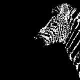 Low Poly Safari Art - The Zebra - Black Edition