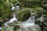 Water Flowing in a Surreal Stream from Forest