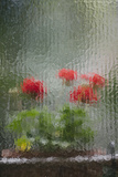 Flowers Seen Through Very Old Glass in a Hotel in Florence  Italy