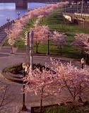 Spring in Portland