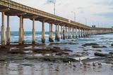 Ocean Beach Pier I
