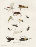 Fishing Flies I