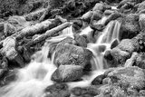 Forest Stream BW