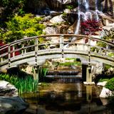 Japanese Garden V