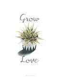 Succulent Life III *Exclusive*