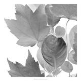 Dancing Leaves IV *Exclusive*