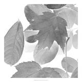 Dancing Leaves III *Exclusive*