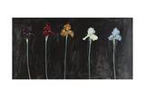 Midnight Irises