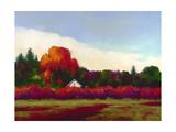 Grapevines in Autumn