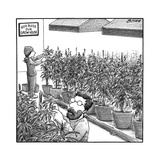 "Two people tending weed  and a sign that says ""God bless our grow house"" - New Yorker Cartoon"