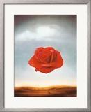 Rose Meditative  c1958