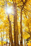 Autumn Sun and Trees  Bishop Creek Canyon California