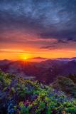 Late Spring Sunrise Magic  Mount Diablo  Lafayette  California  Oakland