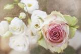 My Friend the Rose