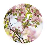 In Bloom - Sphere