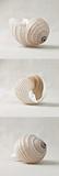 Seashell Trio I