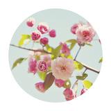 Spring Glow - Sphere