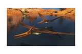 Pteranodon Reptiles Searching for Food in a Lake