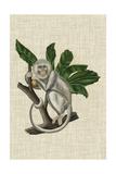 Canopy Monkey II Reproduction d'art par Naomi McCavitt