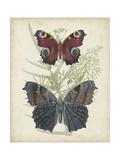 Butterflies and Ferns III