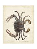 Vintage Crab I