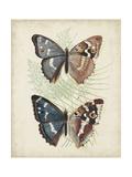 Butterflies and Ferns IV