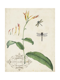 Canna and Dragonflies I