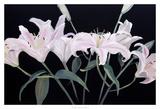 Dramatic Lilies