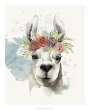 Llama Flora I