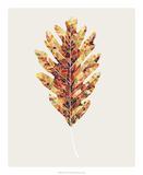 Fall Mosaic Leaf I