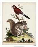 Edwards Squirrel