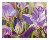 Iris Details I