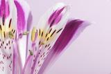Macro Shot Flower Blossom