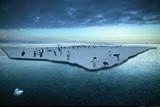 Adelie Penguins on an Ice Floe Cape Adare Antarctica