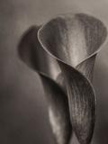Bronze Calla Lily - 2