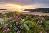 Wild Flowers Growing Amongst the Dunes at Crantock  Cornwall