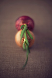 Spring Red and Yellow Onions