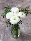 White Ranunculus Flowers in Vase Grey Background