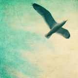Close-Up of a Gull Flying in a Texturized Sky