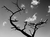 Dead Tree and Branches Against Sky  Northern Ireland