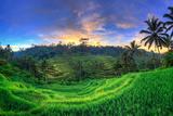 Indonesia  Bali  Ubud  Ceking Rice Terraces