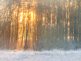 Forest in Winter with Bright Sunlight