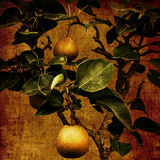 A Bonsai Pear Tree with Two Fruit Against a Rich  Gold Craquelure Background