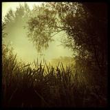 A Misty Scene across Reeds