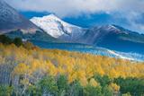 Aspen and Snow-Capped Peaks  La Sal Mountains  Utah