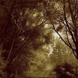 A Path Through Woodland with over Hanging Trees