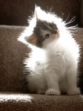 Close Up of Small Kitten Sitting at Bottom of Stairs  Glowing under Sunlight