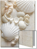 White Sea Shells