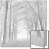 Morning Mists Iv Acrylique par Doug Chinnery