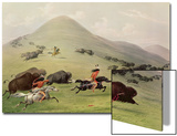 The Buffalo Hunt  C1832 (Coloured Engraving)